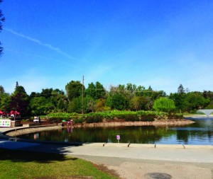 Constructed Wetlands